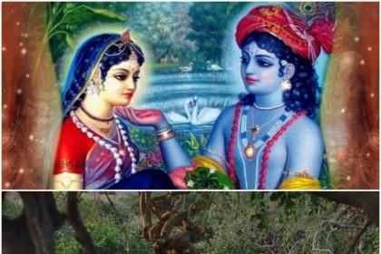 ऐसा माना जाता है कि वृंदावन में स्थित निधिवन में कृष्ण गोपियों संग रास रचाते थे और यह क्रम आज भी जारी है।