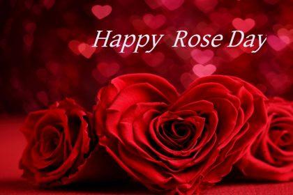 Valentine Rose Day