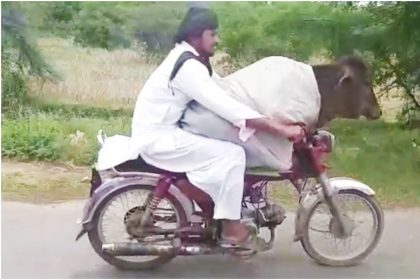 मोटरसाइकिल पर सवार गाय की तस्वीर (फोटो ट्विटर)