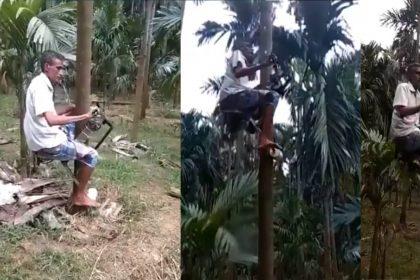 Farmer Climb tree