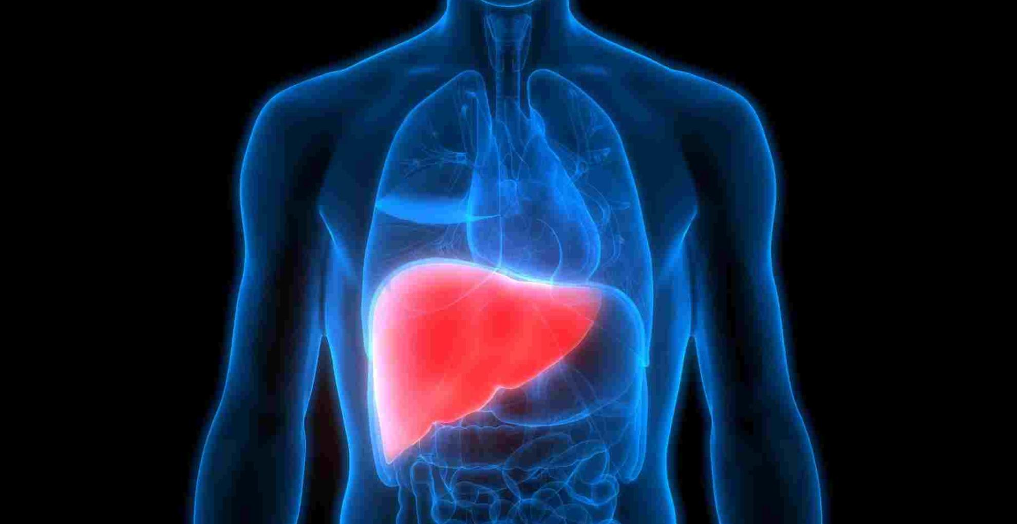 Health Tips: फैटी लिवर की वजह से आप हो सकते हैं कैंसर का शिकार, ऐसे करें इस बीमारी से बचाव