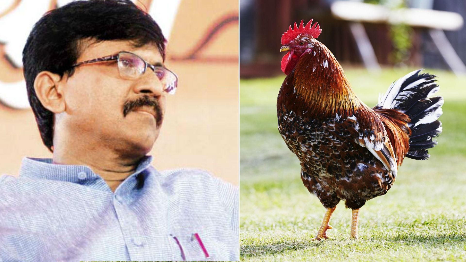 शिवसेना सांसद संजय राउत ने बताया था चिकन और अंडे को शाकाहारी, ट्विटर यूजर्स बोले- मटन से भेदभाव क्यों?