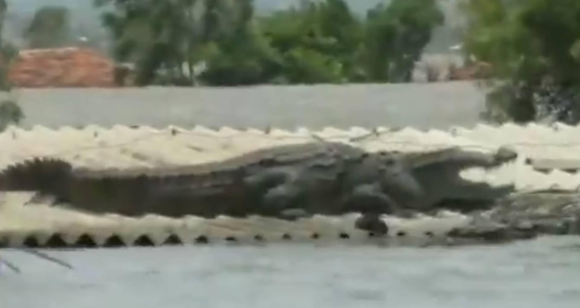 बाढ़ से बचने के लिए मगरमच्छ ने अपनाई ये ट्रिक्स, तो हैरान हुए लोग, देखिए ये वायरल वीडियो