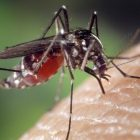 Mosquito Unknown Facts