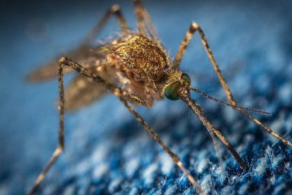 मलेरिया से बचने के लिए इन घरेलू इलाज को अपनाएं (फोटो-पिक्साबे)