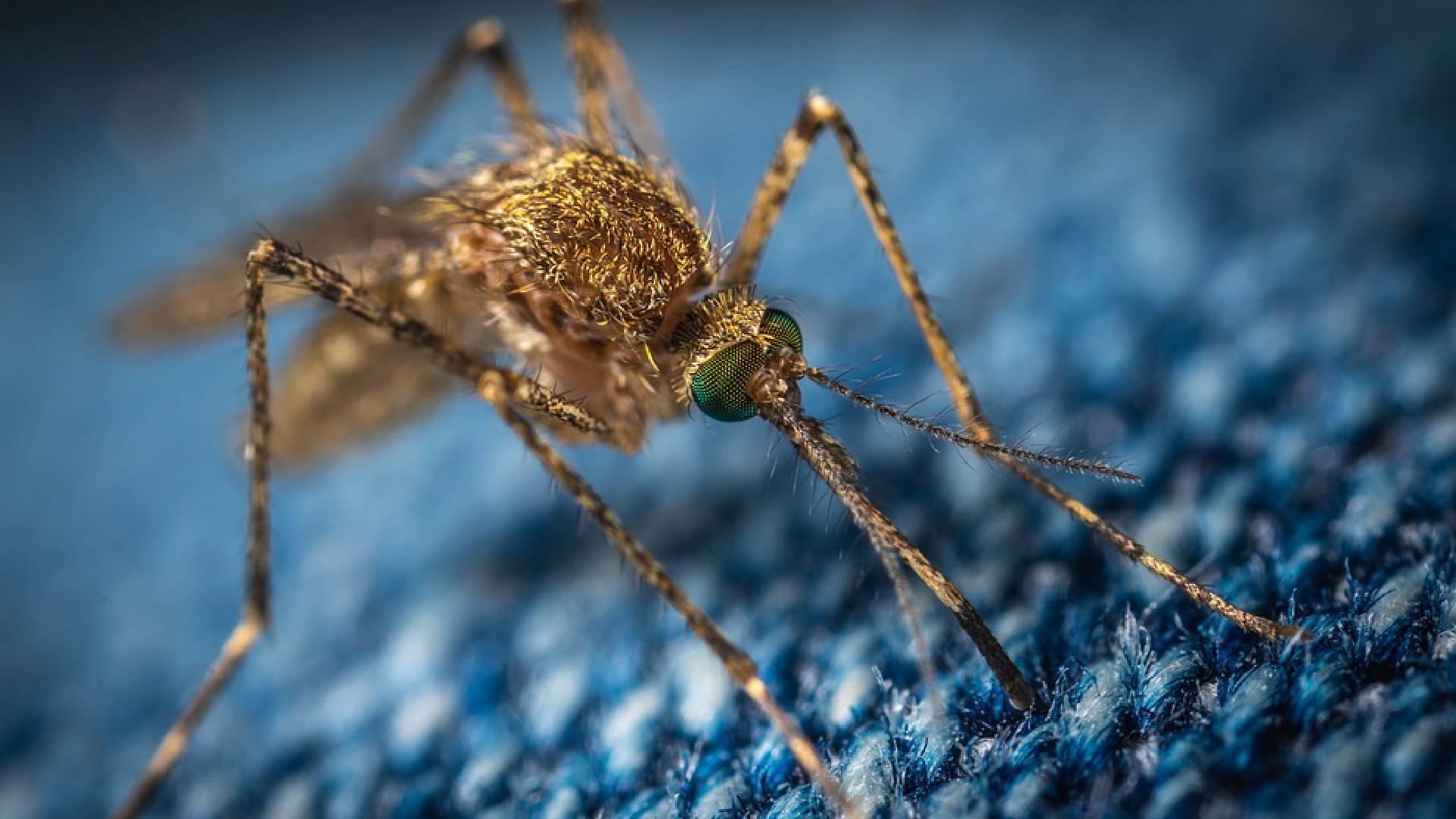 Health Tips: बदलते मौसम में बढ़ा मलेरिया का प्रकोप, यहां जानिए इस बुखार के लक्षण-कारण और घेरलू उपचार