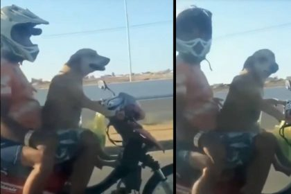 कुत्ते ने दो लोगों को बिठाकर दौड़ाई गाड़ी (फोटो-सोशल मीडिया)