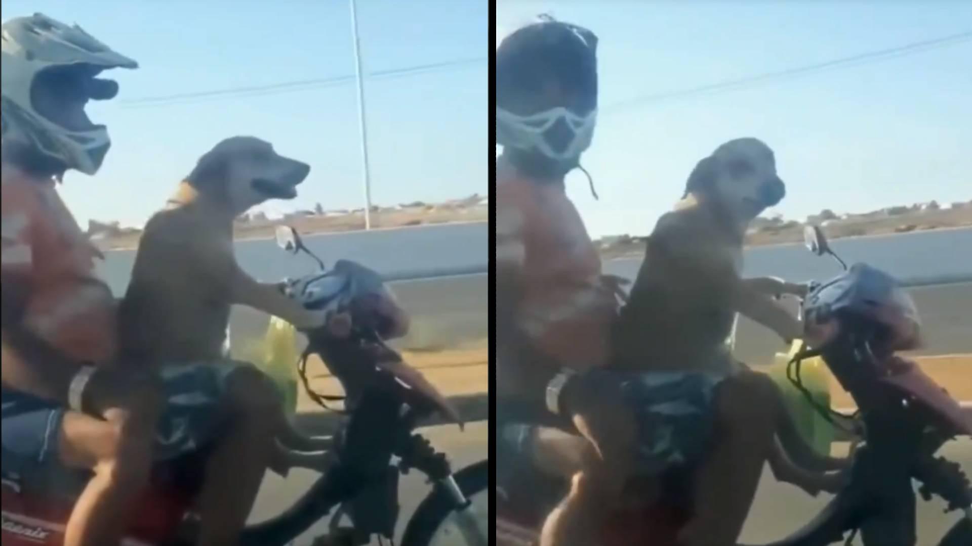 दो लोगों को बिठाकर कुत्ते ने चलाई स्कूटी, रफ्तार ऐसी की देखते रह गए लोग, यहां देखिए ये मजेदार Viral Video