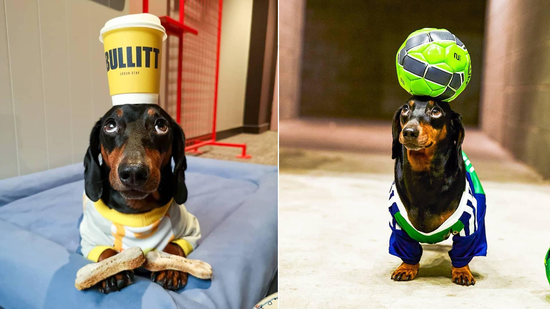 किसी स्टार से कम नहीं है ये कुत्ता, भारी से भारी चीज को भी कर सकता है अपने सिर पर बैलेंस, देखें VIDEO