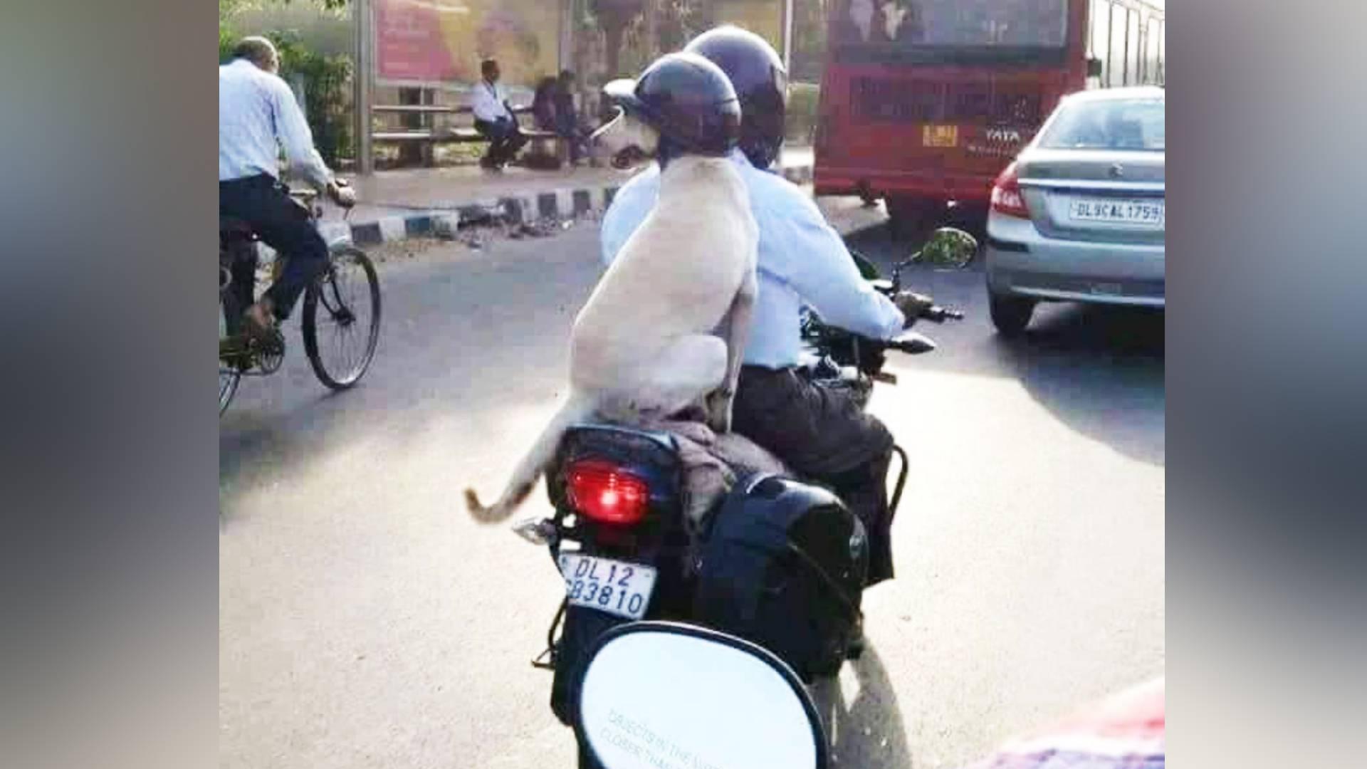 जानवरों में भी चालान का खौफ, बाइक सवार ने अपने कुत्ते को पहनाया हेलमेट, सोशल मीडिया पर तस्वीर हुई वायरल