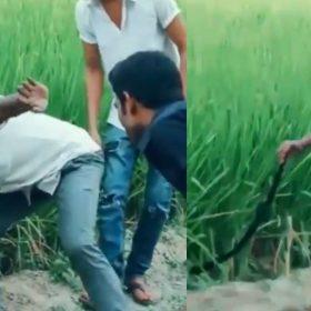 Snake Viral Video