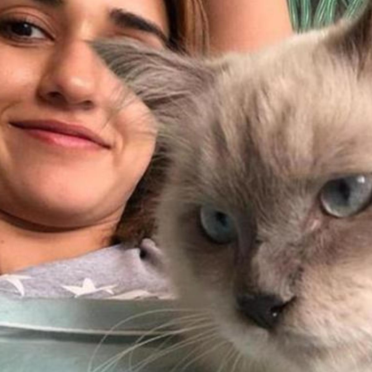 दिशा पटानी के पास बिल्ली भी है, जिसके साथ उनकी बहुत प्यारी प्यारे तस्वीरें हैं! दिशा भी इनकी कंपनी बहुत एन्जॉय करती है और यह हमें उनकी तस्वीरों में साफ़ दिखाई देता है!