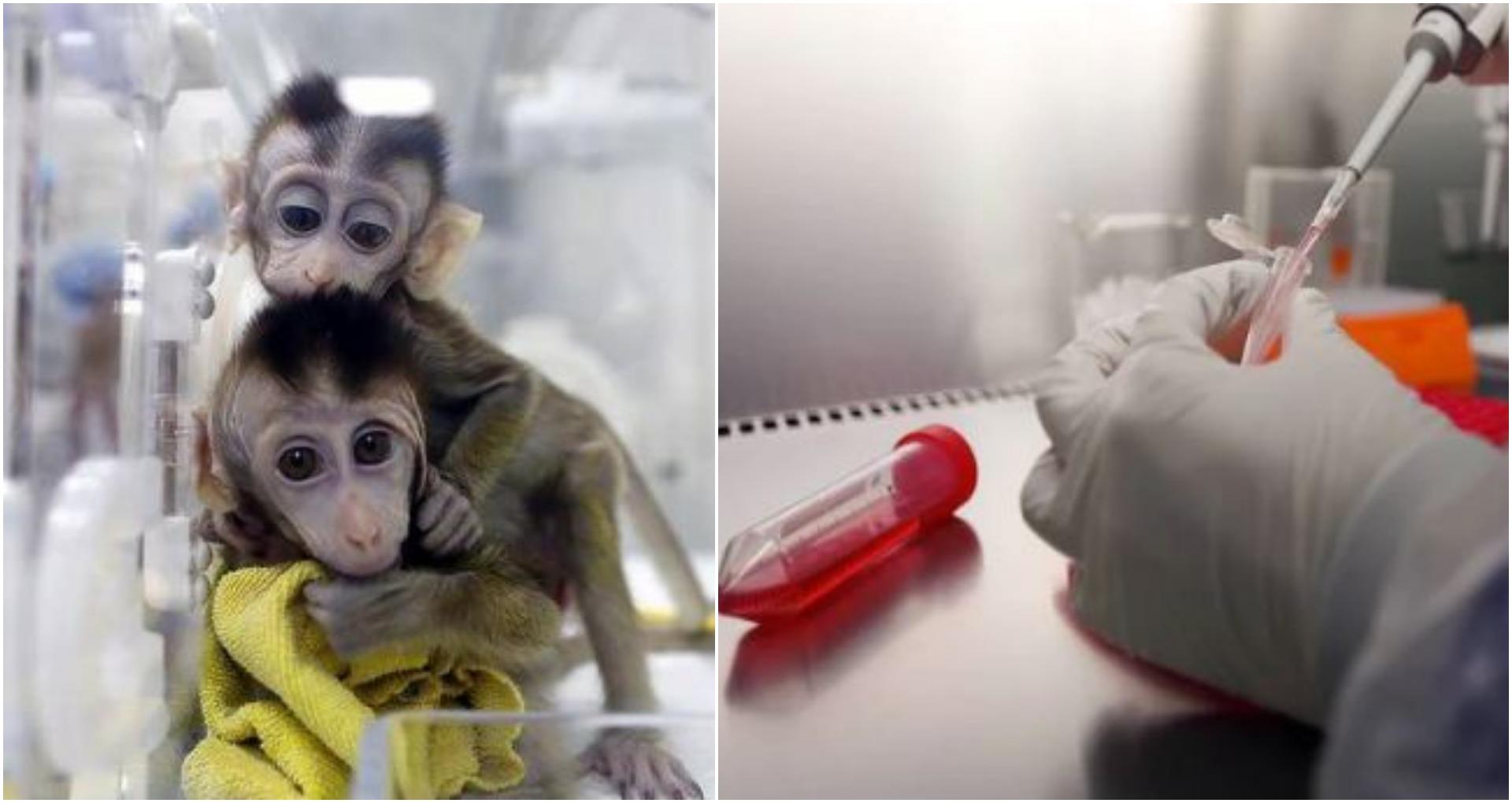 कोरोना संकट में अच्छी खबर आई सामने, इस देश ने बनाई Corona वैक्सीन, बंदरों पर किया सफल परीक्षण