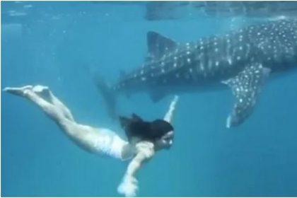 कैटरीना कैफ ने मछली को दी टक्कर, समुद्र में जलपरी की तरह तैरती आईं नजर, देखें शानदार Video