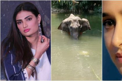 Shraddha Kapoor and Athiya Shetty got angry on human kill pregnant Elephant in Kerala