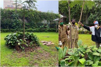 अमिताभ बच्चन ने मां के नाम फिर से लगाया पेड़, तूफान से गिर गया था 44 साल पुराना गुलमोहर
