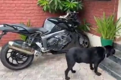 सुशांत के पेट डॉग फज का वीडियो Viral, सुशांत के इंतजार में लगा रहा Bike का चक्कर, देखें Video